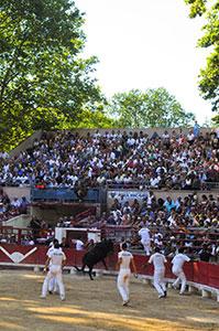 Course Camarguaise La PALME D'OR.finale 2012
